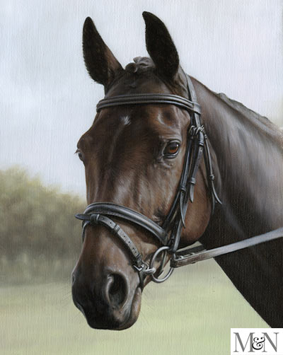 Horse portrait with Tack