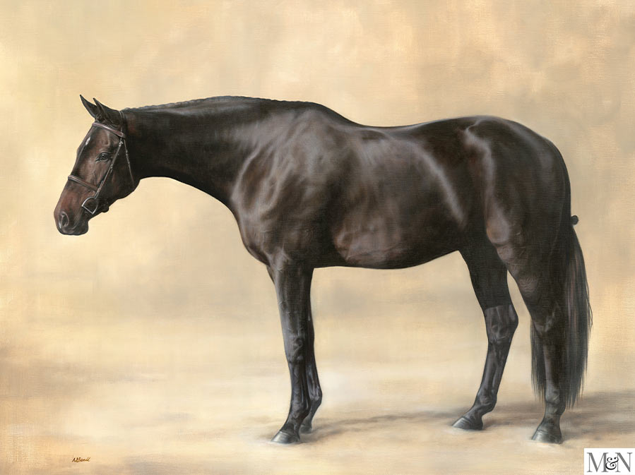 horse portrait full body study