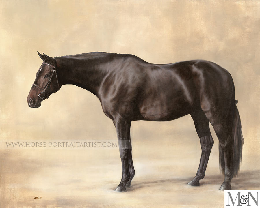 Full Body Horse Portraits