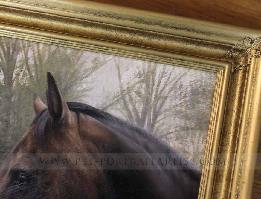 Horse Portraits Gallery