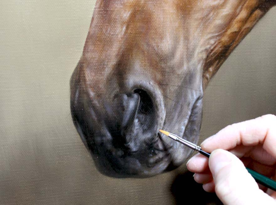 Race horse portraits