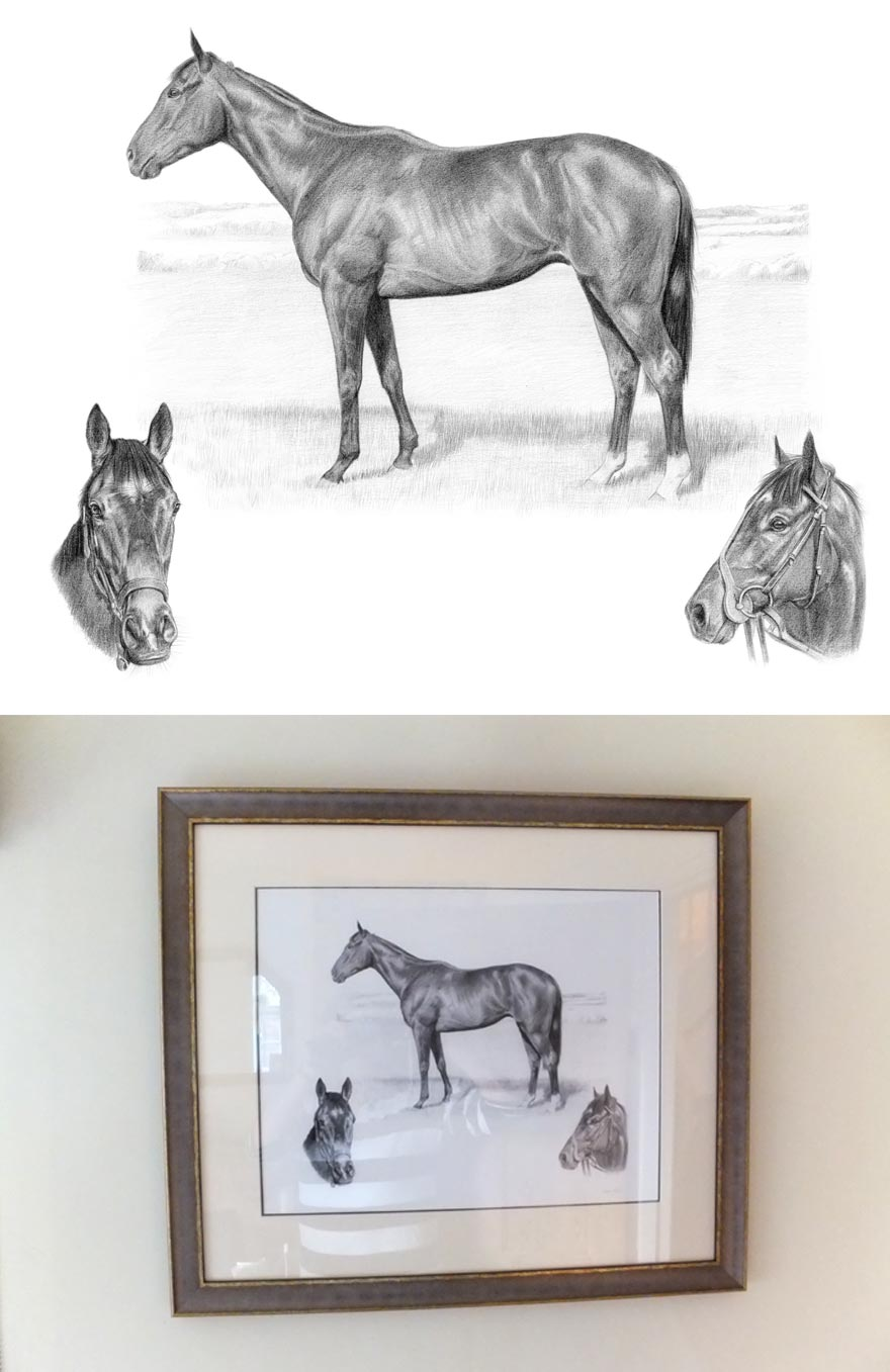 Horse Portraits in Pencil
